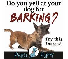 Best How to train a dog not to bark at everything
