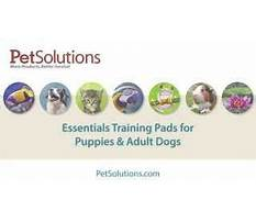 Best How to train a dog to track scents.aspx