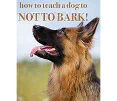 Best How to train a puppy to not bark