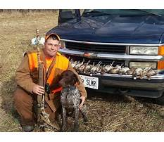 Best How to train a rabbit like a dog.aspx