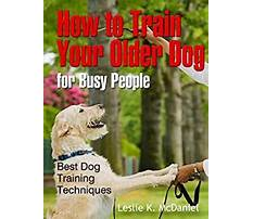 Best How to train an older dog