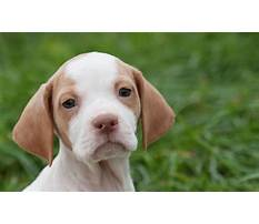 Best How to train dog dor kennel.aspx