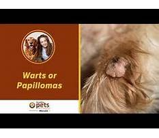 Best How to train dog to drop toy.aspx