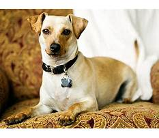 Best How to train search rescue dogs.aspx