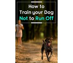 Best How to train your beagle not to run away