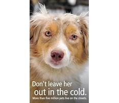 Best How to train your dog from pulling on leash.aspx