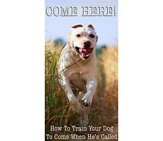 Best How to train your dog to come every time
