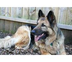 Best How to train your dog to go potty outside.aspx