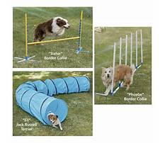 Best How to train your dog to search your house.aspx