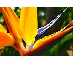 Best How to train your dog to stop being whiny.aspx