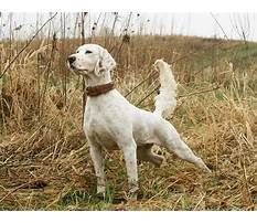 Best How to train your working dog.aspx