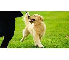 Best Hunters dog training cave creek.aspx