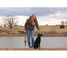 Best Hunting dog training east texas.aspx