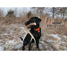 Best Hunting dog training mn.aspx