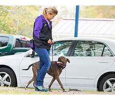 Best Hunting dog training monroe mi.aspx