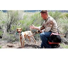 Best Hunting dog training videos free.aspx