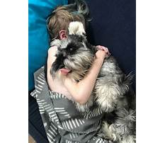 Best In home dog training perth.aspx
