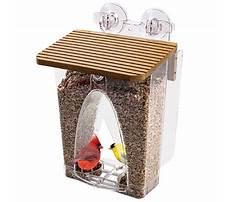 Best In window bird feeder.aspx