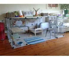 Best Indoor rabbit enclosure