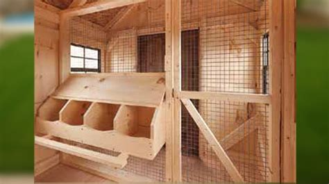 Inside-Chicken-Coop-Plans-For-20-Chickens