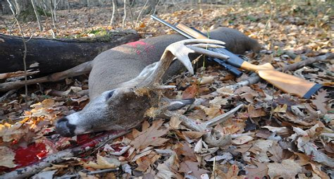 Is A Rifle Or Shotgun Better For Deer Hunting And 16 Inch Rifled Shotgun Barrel