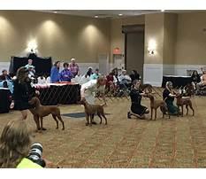Best John suits dog training