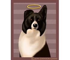 Best Joni johnson godsy dog training