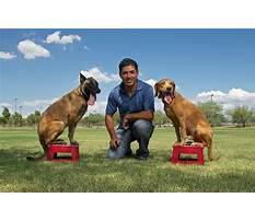 Best Jonny be good dog training