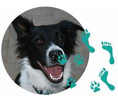 Best Joondalup dog agility training