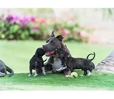 Best Jublea dog training