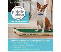 Best Judy bernard dog training