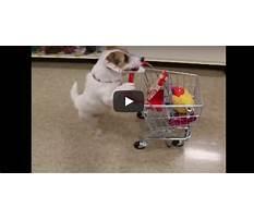 Best Just jesse dog training