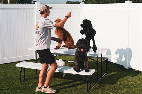 K9 dog training maryland Image