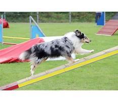 Best K911 dog training