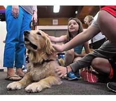 Best Kansas city therapy dog training.aspx