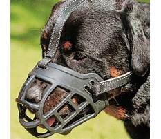 Best Keep dog from biting