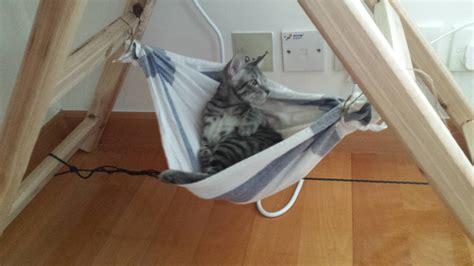 Kitty-Hammock-Diy