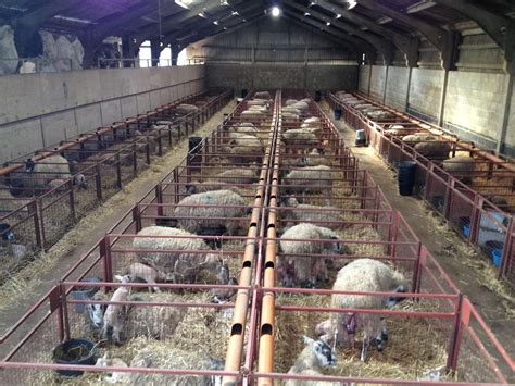 Lambing-Shed-Plans