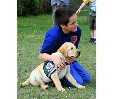 Best Lansing mi service dog training for diabetes.aspx