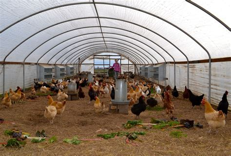 Large Chicken Coop Plans For 50 Chickens