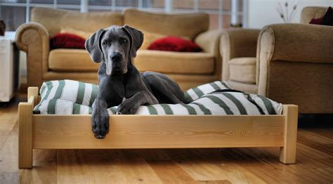 Large Dog Bed Build
