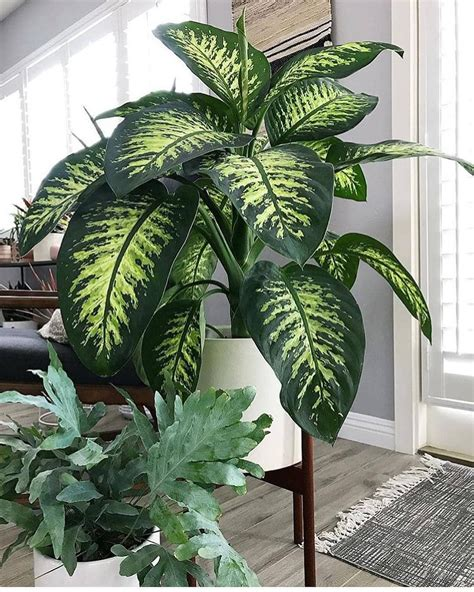 Large Green House Plants