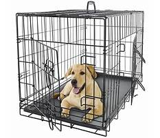 Best Large dog cages for cheap