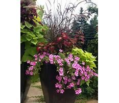 Best Large planter ideas full sun