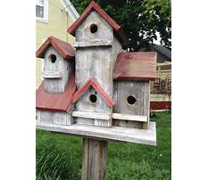 Best Large wooden bird houses for sale on pole