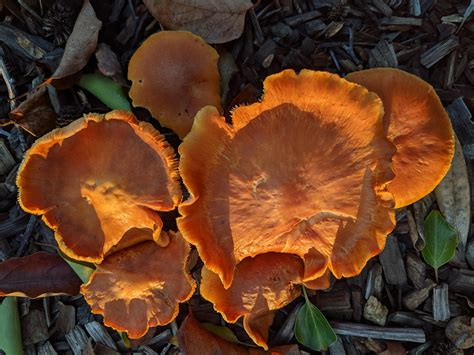 Learn-Woodworking-Bay-Area