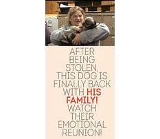 Best List of easy to train small dogs.aspx