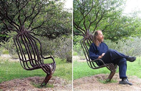 Living Tree Chairs