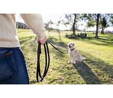Best Long line for dog training.aspx