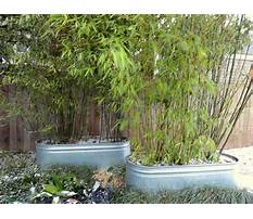 Best Long planters for bamboo
